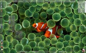 GlassClownFish