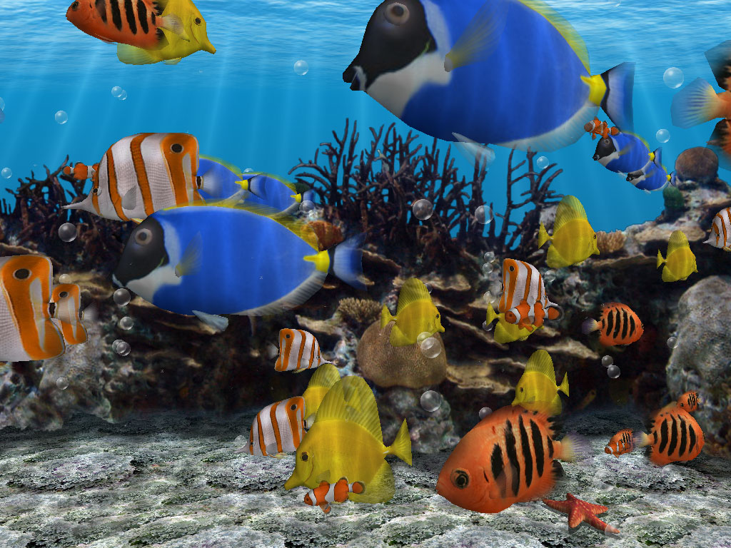 wincustomize explore screensavers aquarium screen saver. Black Bedroom Furniture Sets. Home Design Ideas