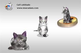 Cat's attitude