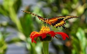 Butterfly Slurpee