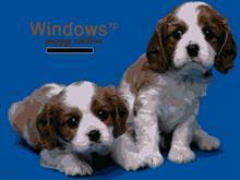 Puppy Edition