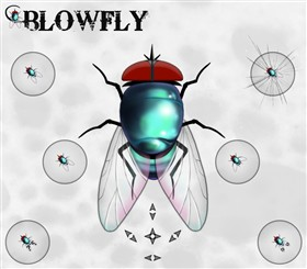 Blowfly