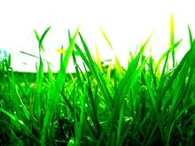 grass by q94