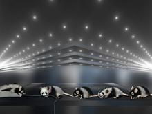 Panda-mouse