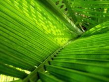 Palm Shade