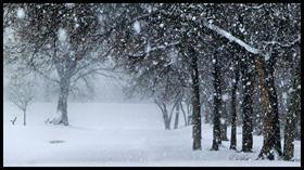 Snowfall Trail