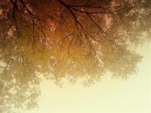 skyline leafs