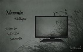 Maranta Wallpaper