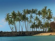Palm View