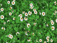 Animated Spring Desktop
