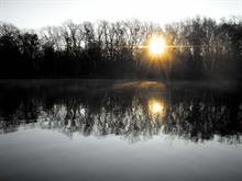 Foggy Birch Pond