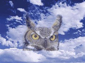 owl_repaired
