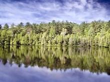 Lake Shore Treeline