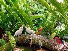 Birdie Jamboree