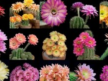 assorted cactus flowers