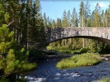 forestbridge