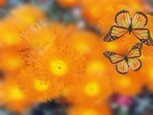 ButterflyEffect