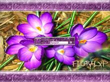 FloralXP