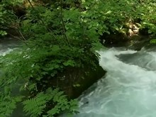 Green_Forest_Stream