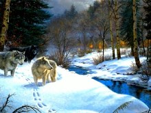 Indian_Camp_Wolfs