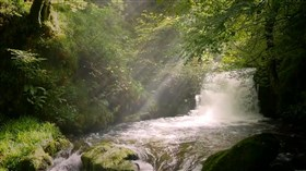 Forest_Creek_Small_Waterfall